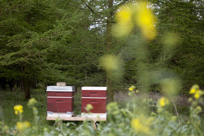 2017-04-Bienen-Wandern-Raps-027.jpg